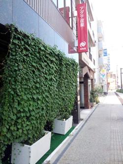 グリーンカーテン(本社玄関横に設置)
